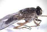 Đòi 500 triệu vì chai nước ngọt có ruồi là phạm tội?