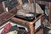 Tiết lộ khó tin về xác ướp nhà thám hiểm trong du thuyền ma