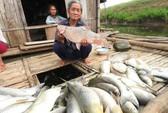 Cá chết hàng loạt trên sông: Nhà máy đền bù cho dân 1,4 tỉ đồng