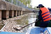 TP HCM: Cá chết do nước ô nhiễm cục bộ