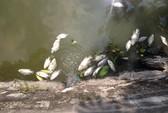 Tổng kiểm tra hệ thống xả thải ra hồ Tây sau vụ cá chết