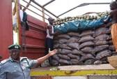 Trung Quốc nói gạo giả để trưng bày