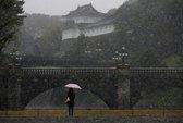Tokyo sững sờ vì tuyết rơi tháng 11
