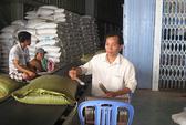 Muốn xuất khẩu gạo phải lập công ty tại… Singapore