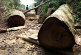 Cấm phá rừng… cho vui