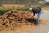 Bán tháo cây thuốc quý cho Trung Quốc
