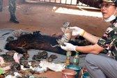 Phát hiện 40 xác hổ con trong chùa Thái Lan