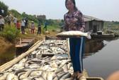 Thanh Hóa báo cáo Thủ tướng vụ cá chết hàng loạt