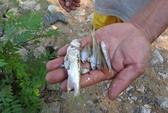 Chưa rõ nguyên nhân cá chết hàng loạt trên sông nổi bọt