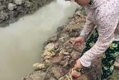 Khởi tố vụ hơn 3.500 cây cam sành bị chặt phá