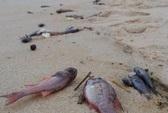 Bộ TN-MT: Hiện tượng cá chết hàng loạt có thể tái diễn