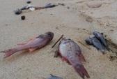 Cá chết hàng loạt, lỗi của ai?