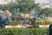 Hàng trăm cây cau trên đường Phạm Văn Đồng bị chặt hạ