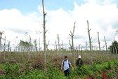 Loay hoay chặt - trồng, nuôi - bỏ
