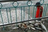 Thiếu ôxy, cá chết trắng hồ Tây
