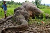 Hàng loạt động vật bên bờ tuyệt chủng