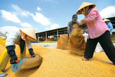 Đừng để người Việt phải ăn gạo ngoại