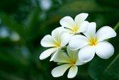 Loại hoa nào cấm kỵ cúng trên bàn thờ?