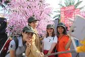 TP HCM: Khai mạc Lễ hội Hoa anh đào