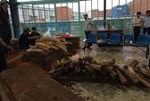 Phát hiện 1 tấn ngà voi bên trong khối gỗ