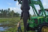 Choáng với cá sấu khổng lồ dài 4 m