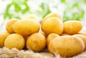 Ăn nhiều khoai tây gây đái đường thai kỳ