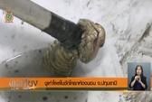 Thái Lan: Rắn hổ mang tái xuất trong nhà vệ sinh
