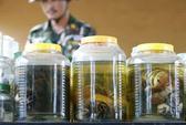 Thái Lan buộc tội 3 nhà sư buôn bán động vật hoang dã trái phép
