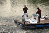 """""""Cò cá"""" bắt tay thương lái Trung Quốc lùng sục mua cá tra non"""