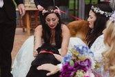 Chú chó ráng sống để dự đám cưới cô chủ