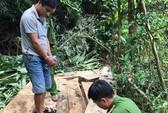 Nghệ An: Bắt lâm tặc phá rừng phòng hộ
