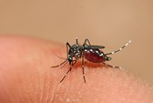Biến chứng mắt trong bệnh sốt xuất huyết