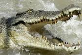 Thoát chết ngoạn mục khỏi hàm cá sấu