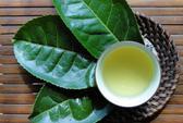 Trà xanh và cà phê: Loại nào tốt cho sức khỏe hơn?