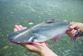 6 loại cá nên hạn chế ăn vì dễ ngộ độc