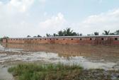 Trại nuôi heo bơm nước bẩn ra môi trường