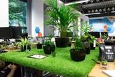 Hô biến góc làm việc thành vườn cây mini cực đẹp