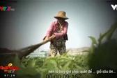 Người phụ nữ dùng chổi quét rau trong phóng sự của VTV lên tiếng
