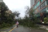 Bão số 12 tan, Khánh Hòa tan hoang, ít nhất 11 người chết