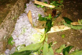 Mưa đá dày đặc hiếm thấy trút xuống Thanh Hóa
