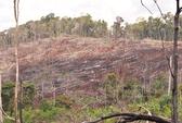 Đạt chỉ tiêu sao thất nghiệp, phá rừng!