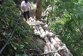 Tàn phá rừng đầu nguồn Khe Đương