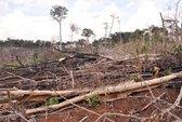 Giao giữ rừng lại làm mất rừng