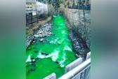 Giải mã hiện tượng nước sông bỗng dưng xanh lét ở Tây Ban Nha