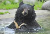 Du khách Trung Quốc giết gấu bằng súng máy