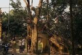 Ly kỳ vụ mua bán cây sưa 24,5 tỉ ở Bắc Ninh