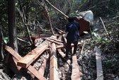 Làm lơ lệnh đóng cửa rừng (*): Rừng vẫn lâm nguy