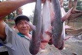 Tính kế bền vững cho cá tra