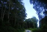 Dồn sức giữ rừng (*): Lao vào