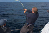 Câu được cá ngừ vây xanh